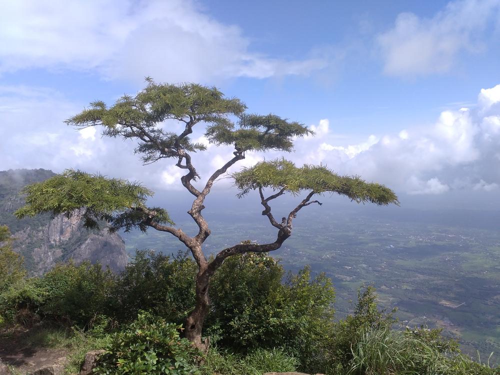 Nelliyampathy Peak